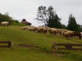 2011.10.08.09合歡山、清境農場:IMGP1102.jpg