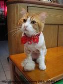 貓咪寫真:DSC04679.JPG