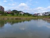 五分埤水鳥天堂~蒼鷺、白鷺鷥、黃頭鷺、樹雀、翠鳥:五分埤水鳥天堂