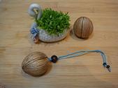 種子飾品:DSC01341.JPG