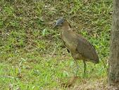 鳥類:IMGP1049.JPG