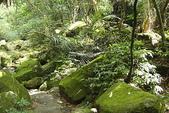 青山瀑布步道:DSC06276.JPG