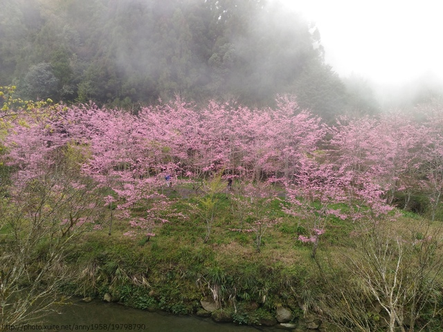 P_20160227_125008.jpg - 杉林溪櫻花河谷