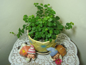種子盆栽:DSC00166.JPG