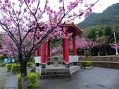 屈尺公園 [櫻花公園]~寒櫻:屈尺公園 [櫻花公園]