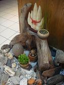 中東海棗種子盆栽:DSC00190.JPG