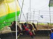 2011.10.08.09合歡山、清境農場:IMGP1268.JPG