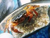 生活:螃蟹 (2).JPG