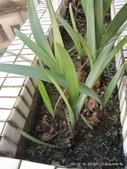 10303老租窩與小花圃:IMG_0230.JPG