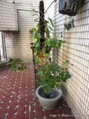 10303老租窩與小花圃:IMG_0236.JPG
