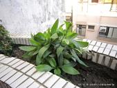 10303老租窩與小花圃:IMG_0228.JPG