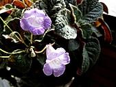 辦公室小花園:IMG_1695.JPG