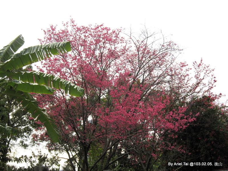 103年辦公室的小花園與公司後山:1-IMG_4576.JPG