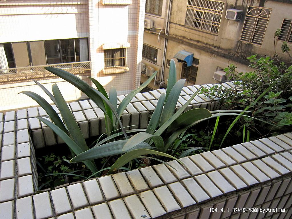 104年辦公室與老租窩花園:IMG_0861.JPG
