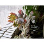 老租窩的小花圃:相簿封面