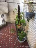 10303老租窩與小花圃:IMG_0234.JPG