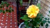 10303老租窩與小花圃:1-DSC_0869.jpg