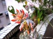 老租窩的小花圃:大開花