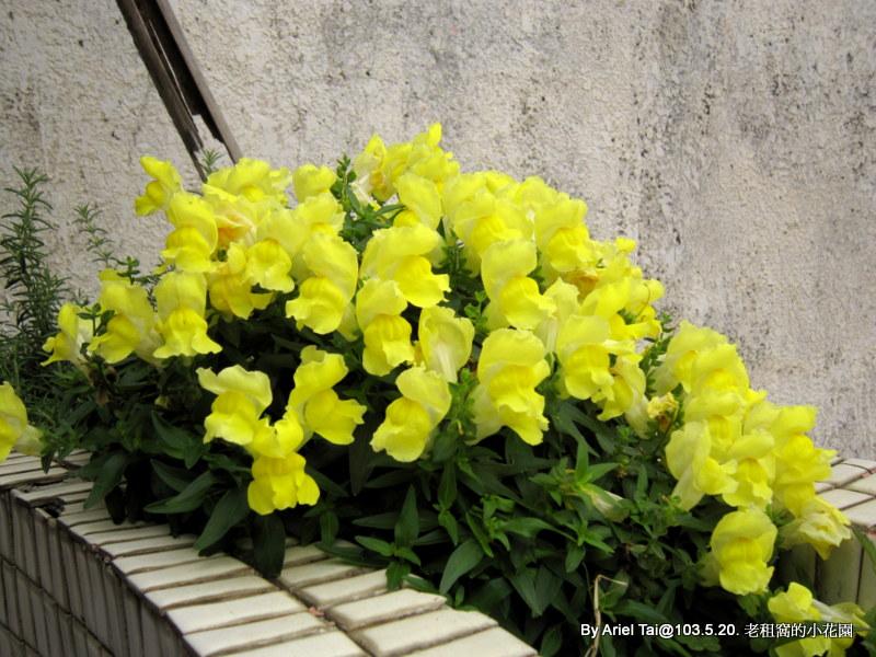 10303老租窩與小花圃:IMG_7051.JPG
