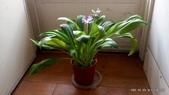 10303老租窩與小花圃:3-DSC_0623.jpg