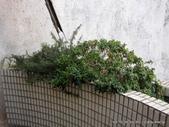 10303老租窩與小花圃:IMG_0229.JPG