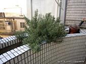 10303老租窩與小花圃:IMG_0232.JPG