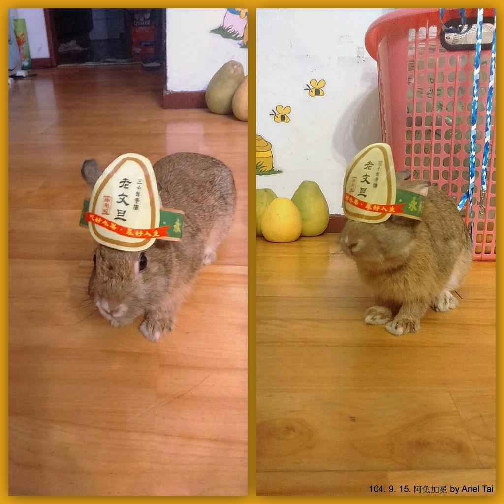 1040523姐姐家的兔兔:1040523姐姐家的阿兔-001.jpg