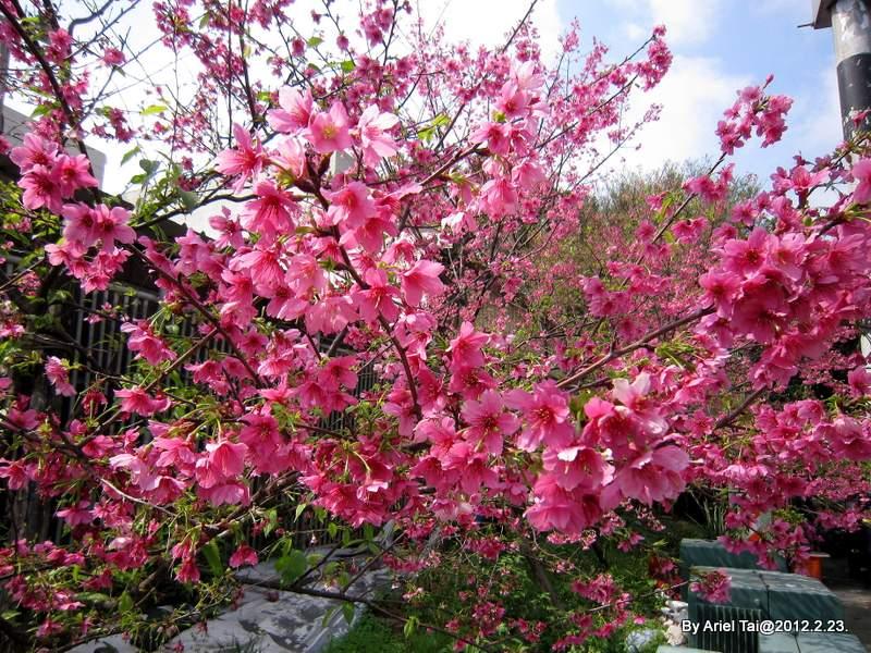 102春小遊─麗池公園和水溝公園:IMG_6545.JPG