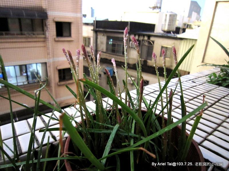 10303老租窩與小花圃:IMG_7724.JPG