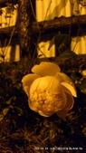 10303老租窩與小花圃:1-DSC_0858.jpg