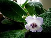 辦公室小花園:IMG_0148.JPG