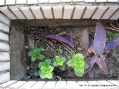10303老租窩與小花圃:IMG_0237.JPG