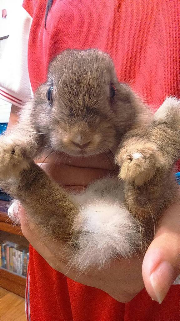 1040523姐姐家的兔兔:16850.jpg