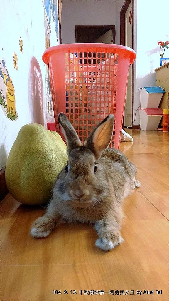1040523姐姐家的兔兔:1441982953398.jpg