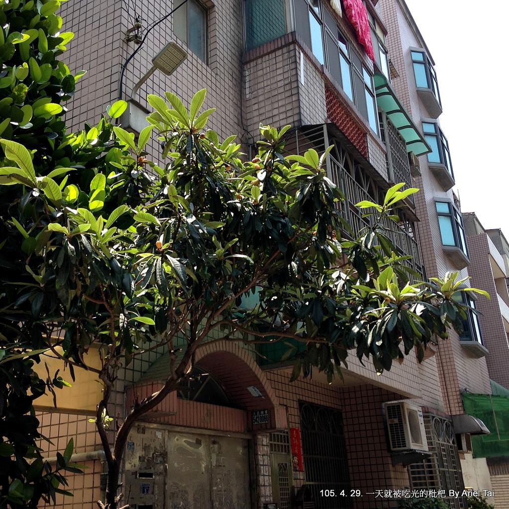 105生活小花園:IMG_1234.JPG