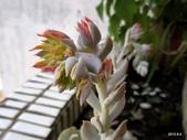 老租窩的小花圃:花花近照