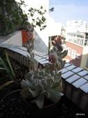 老租窩的小花圃:玉蝶開花