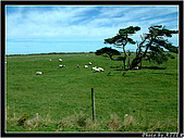 紐西蘭C:NZ0509.jpg