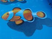 3D彩繪 牆壁彩繪 3d壁畫彩繪:3D彩繪 牆壁彩繪 3D立體壁畫 壁畫 彩繪作品 (87).jpg