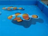 3D彩繪 牆壁彩繪 3d壁畫彩繪:3D彩繪 牆壁彩繪 3D立體壁畫 壁畫 彩繪作品 (86).jpg