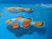 3D彩繪 牆壁彩繪 3d壁畫彩繪:3D彩繪 牆壁彩繪 3D立體壁畫 壁畫 彩繪作品 (16).jpg