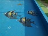 3D彩繪 牆壁彩繪 3d壁畫彩繪:3D彩繪 牆壁彩繪 3D立體壁畫 壁畫 彩繪作品 (79).jpg