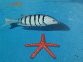 3D彩繪 牆壁彩繪 3d壁畫彩繪:3D彩繪 牆壁彩繪 3D立體壁畫 壁畫 彩繪作品 (82).jpg