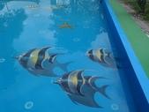 3D彩繪 牆壁彩繪 3d壁畫彩繪:3D彩繪 牆壁彩繪 3D立體壁畫 壁畫 彩繪作品 (9).jpg