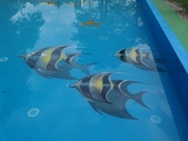 3D彩繪 牆壁彩繪 3d壁畫彩繪:3D彩繪 牆壁彩繪 3D立體壁畫 壁畫 彩繪作品 (10).jpg