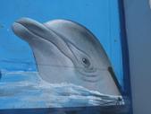 3D彩繪 牆壁彩繪 3d壁畫彩繪:3D彩繪 牆壁彩繪 3D立體壁畫 壁畫 彩繪作品 (27).JPG