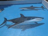 3D彩繪 牆壁彩繪 3d壁畫彩繪:3D彩繪 牆壁彩繪 3D立體壁畫 壁畫 彩繪作品 (34).JPG
