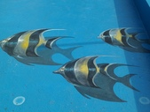 3D彩繪 牆壁彩繪 3d壁畫彩繪:3D彩繪 牆壁彩繪 3D立體壁畫 壁畫 彩繪作品 (55).jpg