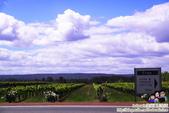 澳洲伯斯Perth Day4 Swan Valley 天鵝谷 :DSC_1118.JPG