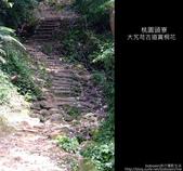 2009.04.30 大艽芎古道賞桐花:DSCF2005.JPG